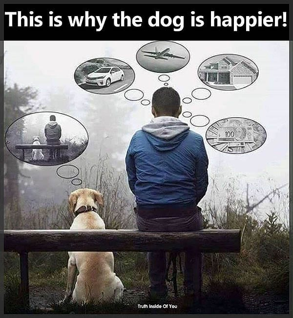 This-is-why-the-dog-is-happier 600px perspectives